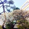 慶応義塾女子高等学校入学辞退