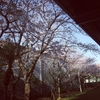 【OL日記】桜!春のおとずれ&髪型イメチェン失敗(笑)