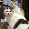 CIAOちゅーるは猫における締めのラーメンのようなもの