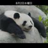 パンダ的日常