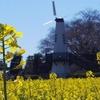 菜の花と桜の名所!見沼グリーンセンター(さいたま市)には春がそこまで来ているよ
