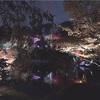 今話題の紅葉スポット!『目白庭園』ライトアップが綺麗すぎる