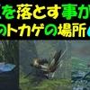 【モンハンライズ】 鎧玉 を落とす3種のトカゲの場所6ヶ所  〔大社跡〕