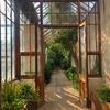 ケンブリッジ大学の美しい植物園①〜Cambridge University Botanic Garden
