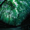 明朝の京都と曽爾高原