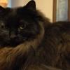 猫ログ:今日の王子 6