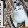 猫の道具 ~むくの破壊行為~