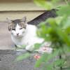 今日の景色 05/28 猫たち