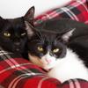 今日の黒猫モモ&白黒猫ナナ!