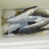 那珂川の釣果情報