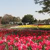 【トピック】ポケカピクニック部in青葉の森公園 4/21(日)千葉