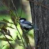 【野鳥】まったり野鳥撮影@奈良山公園
