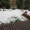 雪と地震と美容院