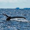 どこかにマイル~南の島~を利用して奄美大島でザトウクジラウオッチングを人生で1度は体験!?