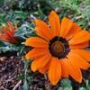 お花が笑っています(*^ω^*)お花の綺麗な季節の到来