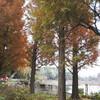 針葉樹の駅