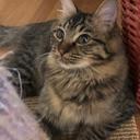たぬき猫マロン