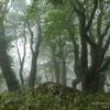112 霧の中の 楽園