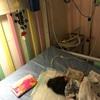 今月3度目の入院