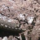 姫路で瓦の文化を守る四代目表瓦社長のブログ