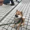ファーマーズマーケットに遊びに来てくれたカワイイ動物のお客サマ
