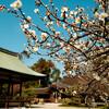 第1043回 日本の古層〜相対するものを調和させる歴史文化〜(1)
