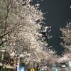 金曜日〜強風と桜と