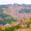 吉野山・世界遺産吉水神社の御朱印と一目千本桜