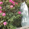 休日のてくてく歩き ~神明社のシャクナゲ~
