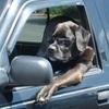 ペットと一緒にドライブに出かけるときに注意したいこと4つ