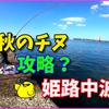 初秋なのに初釣りw今年は我慢の年でした【チヌ釣り動画あり】