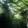 私の出身地、九州の鹿児島県について。