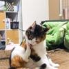 【愛猫日記】毎日アンヌさん#129