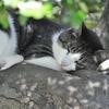 沖縄県は今日も「さくら猫」日和。