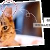 愛猫の命から繋ぐ命