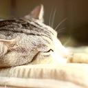 猫男爵の戯れ