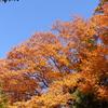 ご近所の今年最後の紅葉を楽しむ