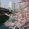パワポと桜と