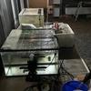 稚魚飼育と2021勉強会