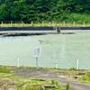 牧区の棚池(仮称)(新潟県上越)