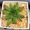 🌵多肉植物  秋の植え替え作業㊳🌵
