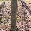 瓜生坂の一里塚跡