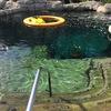 グアム旅行記⑤ ソーマの異変と泳げる水族館 グアム旅行完結編