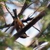 京都府立植物園と御所の野鳥たち。