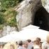 スロベニアのポストイナ鍾乳洞でトロッコ乗ってきた!【夏旅2017】#8