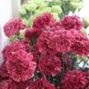 【 Happy Flower Friday ‼︎ 】vol.19