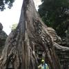 カンボジア・タイ・ミャンマーの旅2016 *シェムリアップ1日目③ 〜夕日に向かって激走〜*