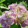 うちの庭を探検!6月の植物~紫陽花の成長~