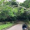 【離島生活】バンナ公園おすすめ散歩コース