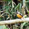 またその辺を散歩して出会える鳥(例外あり)たちを紹介:ヤマガラ、マガモ、コゲラなど